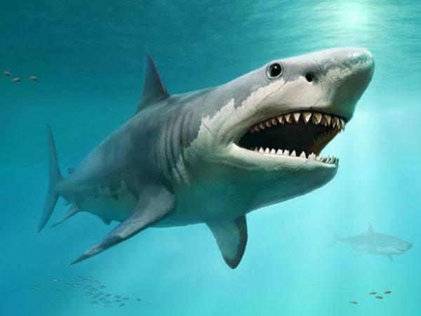Mơ thấy cá mập đánh con gì trúng lớn