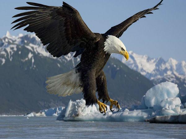 Mơ thấy chim đại bàng đánh con gì đem lại tài lộc